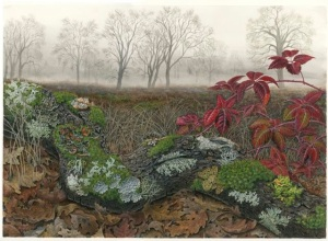 Foggy Morning, Mendocino Lichens, by Lucy Martin