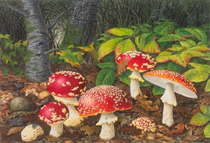 Atascadero Creek (A. muscaria), by Lucy Martin