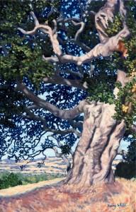 Coast Live Oak, by Henry White